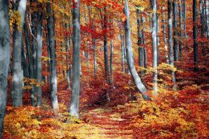 foresta biodiversità alberi