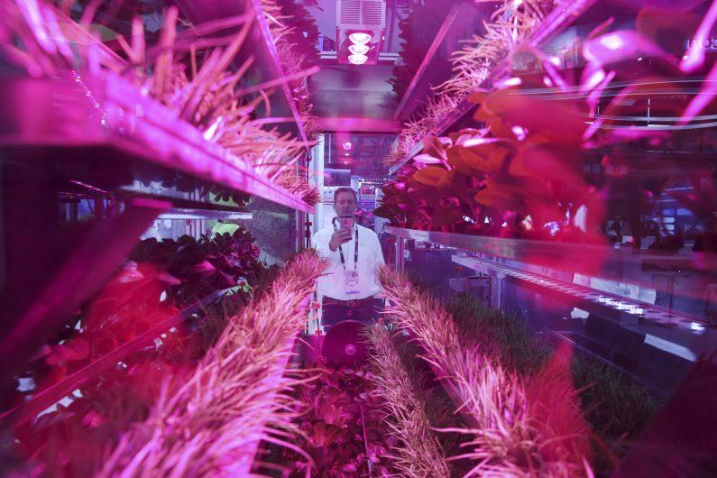 agricoltura verticale big data