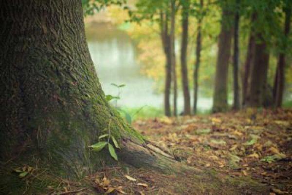 alberi_pefc.jpg