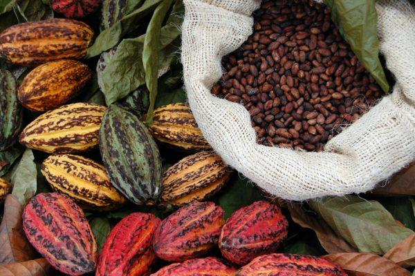 cacao cioccolata cioccolato