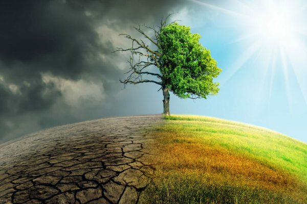 Climate,Change,Withered,Earth