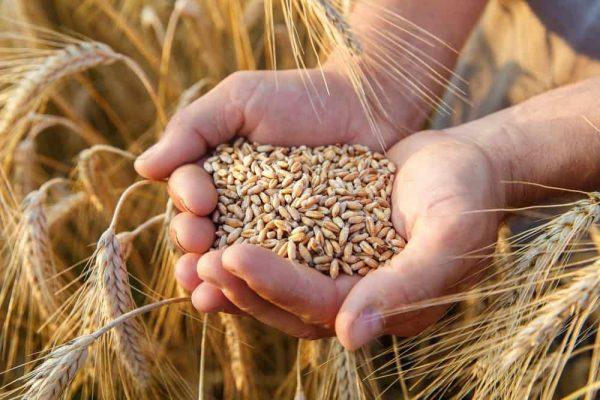 gruppo casillo cdp sace simest grano agricoltura