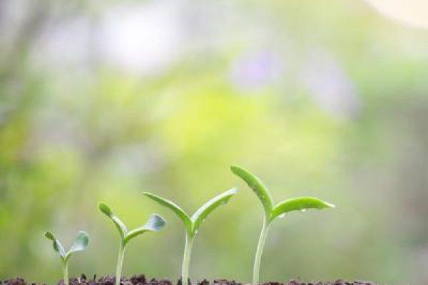 piante per vaccini