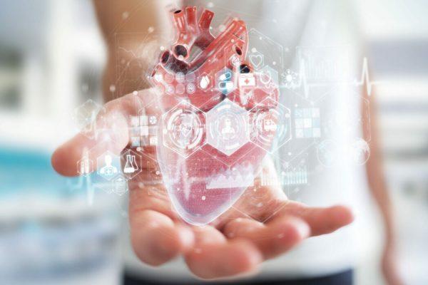 aorta cuore