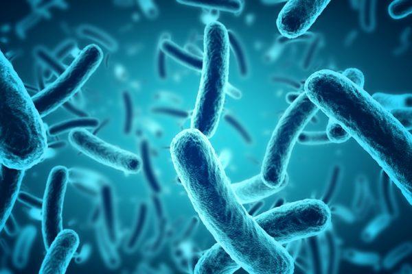 antibiotici batteri