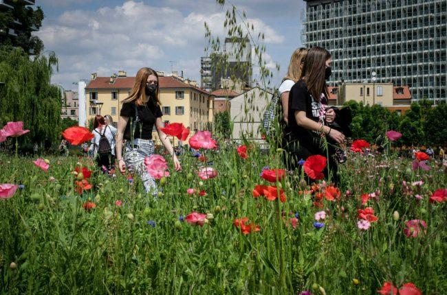 Prato in fiore nei giardini Biblioteca degli Alberi a Porta Nuova Bosco Verticale, Milano, 9 maggio 2021. ANSA/Matteo Corner
