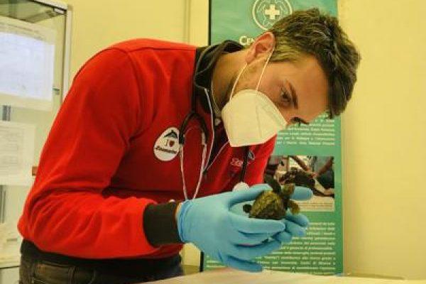 veterinario-con-tartaruga.jpg